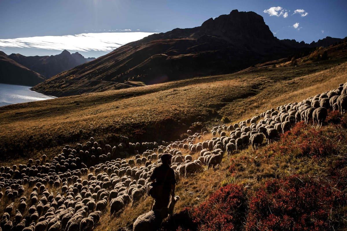 альпийские пастбища
